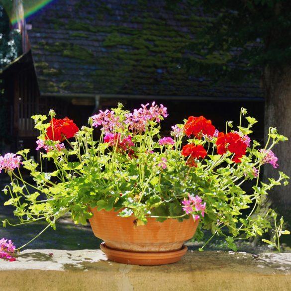 Blumen-vor-Eingang
